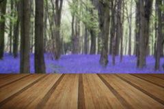 Paisaje vibrante del bosque de la primavera de la alfombra de la campanilla con plan de madera foto de archivo