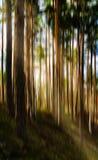 Paisaje vivo vertical del árbol del movimiento con la abstracción ligera del escape Fotos de archivo