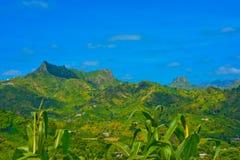 Paisaje volcánico de Cabo Verde, planta de maíz, cuestas de montañas fértiles verdes foto de archivo libre de regalías