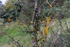 paisaje y árboles con las bayas y las hojas en otoño Foto de archivo