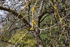 paisaje y árboles con las bayas y las hojas en otoño Imagenes de archivo