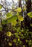 paisaje y árboles con las bayas y las hojas en otoño Imágenes de archivo libres de regalías
