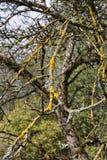 paisaje y árboles con las bayas y las hojas en otoño Imagen de archivo libre de regalías