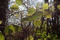 paisaje y árboles con las bayas y las hojas en otoño Foto de archivo libre de regalías