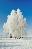 Paisaje y árboles del invierno imagenes de archivo