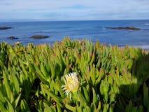 Paisaje y flor de la playa Fotos de archivo libres de regalías