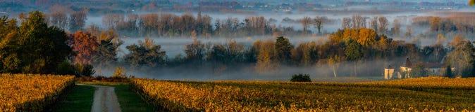 Paisaje y niebla con humo de la puesta del sol en el wineyard Francia, Europa de Burdeos foto de archivo