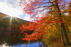 Paisajes coloridos del paisaje de la caída Foto de archivo libre de regalías
