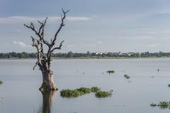 Paisajes con el árbol seco en el lago Fotografía de archivo libre de regalías