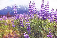 Paisajes de Alaska Fotos de archivo libres de regalías