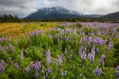 Paisajes de Alaska Imágenes de archivo libres de regalías