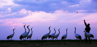 Paisajes de la fauna Fotos de archivo libres de regalías