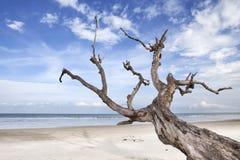 Paisajes de la playa Fotografía de archivo libre de regalías