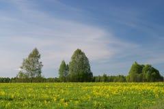 Paisajes de la primavera Fotografía de archivo