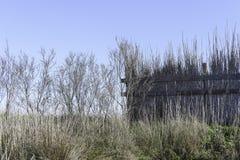 Paisajes de la reserva natural de Diaccia Botrona Foto de archivo libre de regalías