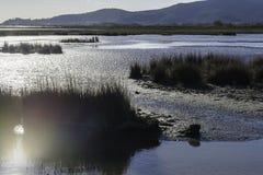 Paisajes de la reserva natural de Diaccia Botrona Imágenes de archivo libres de regalías