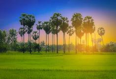 Paisajes de las palmeras del azúcar de la silueta Fotos de archivo libres de regalías