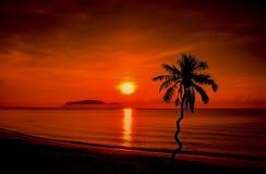 Paisajes de las palmeras del coco de la silueta en la playa Fotos de archivo libres de regalías