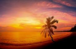 Paisajes de las palmeras del coco de la silueta en la playa Imagen de archivo libre de regalías