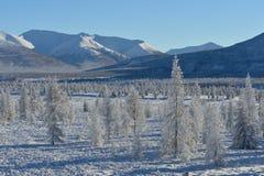 Paisajes del invierno de Oymyakon foto de archivo