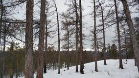 Paisajes del invierno en la monta?a nublada Sugomak del d?a de Urales fotos de archivo
