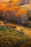 Paisajes del otoño Foto de archivo