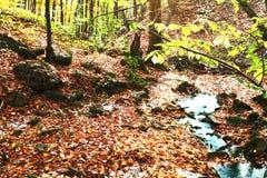 Paisajes del otoño Fotografía de archivo libre de regalías