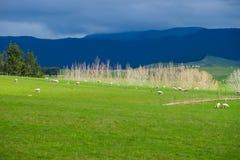 Paisajes en Nueva Zelanda Foto de archivo libre de regalías