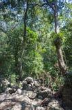 Paisajes escénicos de la selva en el parque nacional de Periyar, Thekkady, Kerala, la India imagen de archivo