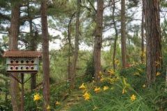 Paisajes hermosos con poca casa del pájaro en el bosque imagenes de archivo