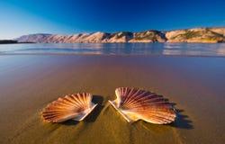Paisajes hermosos, estrellas de mar en la playa en Croacia imagen de archivo libre de regalías