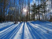 Paisajes magníficos del invierno en un día soleado Imagenes de archivo