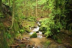 Paisiblement place dans la forêt noire Image stock