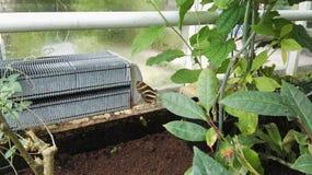 Paix à la maison de nature de papillon Image libre de droits