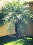 Paix d'arbre Image stock
