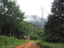 Paix dans la forêt Photo libre de droits