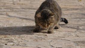 Paix de consommation de chat des poissons banque de vidéos