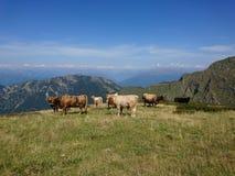 Paix de montagne Photo stock
