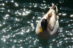 Paix sur l'eau Images libres de droits