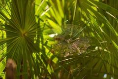 Pająk 3 i swój pająk sieć fotografia stock