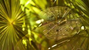 Pająk 2 i swój pająk sieć zdjęcie royalty free