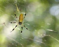 pająk zdjęcia stock