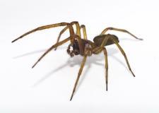 pająk obrazy stock