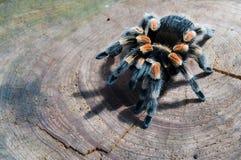 pająk drzwi pułapka zdjęcia royalty free