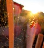 pająk i słońce Obraz Royalty Free
