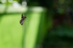 Pająk je motyla Zdjęcia Royalty Free