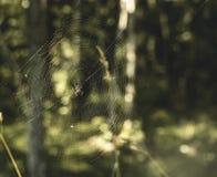pająk jego sieć Obraz Royalty Free