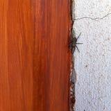 Pająk między drewnianym drzwi i biel ścianą obraz royalty free
