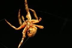 pająk mknąca nić Fotografia Stock