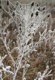 pająk mroźna sieć Zdjęcia Royalty Free